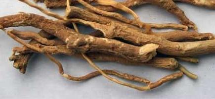 чай золотой алтай для похудения отзывы